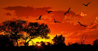 Kenya-Migration-Photo-10-sunset